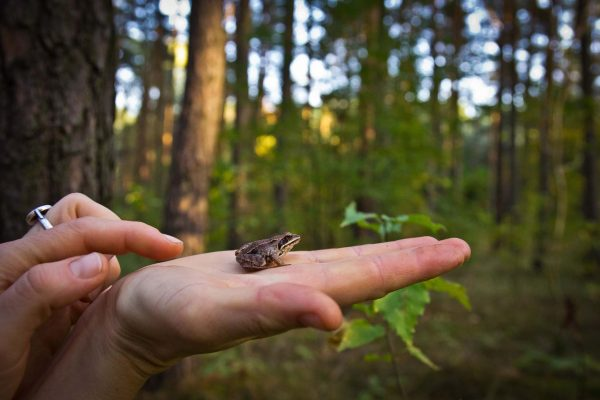 outdoor storys Frosch auf Hand